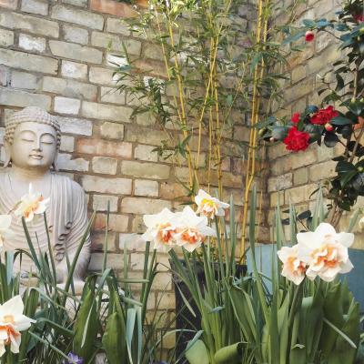 Buddha in the courtyard 2